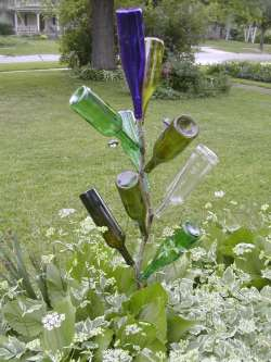bottle tree regular